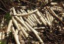 Bananas de dinamite são encontradas em terreno baldio em Italva