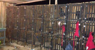 Polícia flagra rinha de galos e detém 24 pessoas